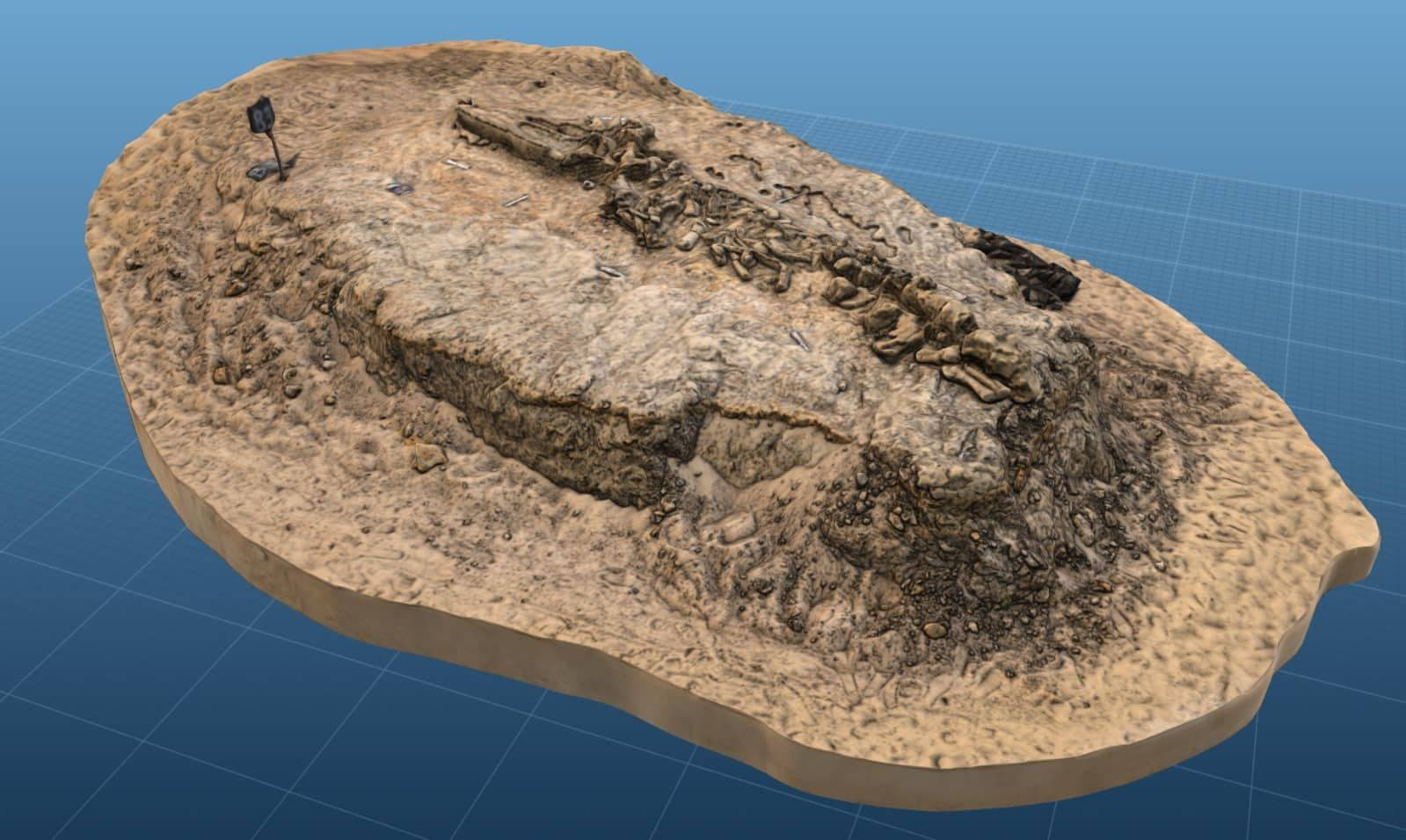 3D model of fossil whale MPC 675 from Cerro Ballena. (Image courtesy of Smithsonian.).